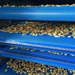 IMG 3426 150x150 Pre essiccatoi e Raffreddatori a nastri per pasta fresca e ripiena