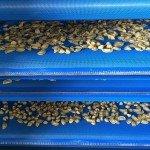 IMG 3434 150x150 Pre essiccatoi e Raffreddatori a nastri per pasta fresca e ripiena