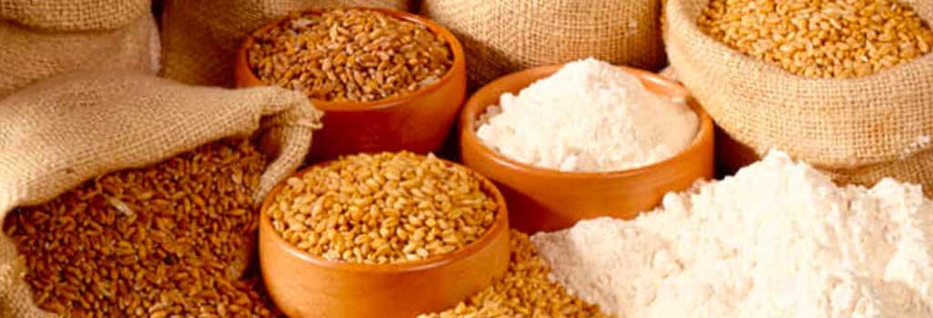 coltivazione di tipologia di grani antichi nelle aziende agricole per produrre pasta