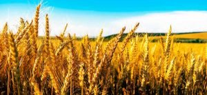 Pastificio Agricolo: dal grano alla pasta, tutto a Cavallo